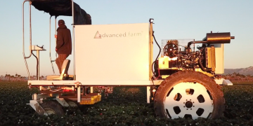 Robotic strawberry picker at work
